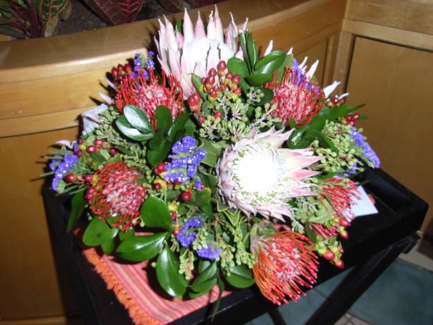 南アフリカの花々