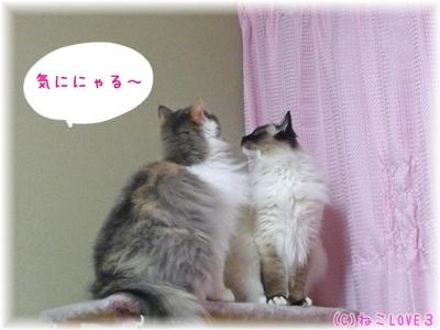 めい&モモ2