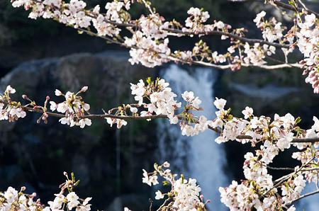 鮎壷の滝 2012.4.7-5