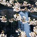 Photos: 鮎壷の滝 2012.4.7-5