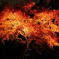 染井門の紅葉