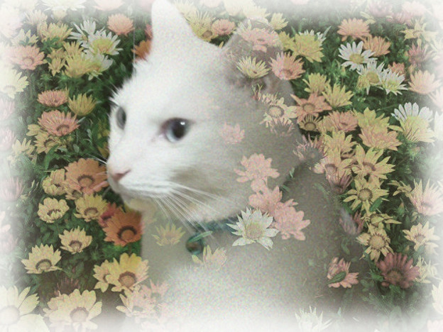 flowerミルク