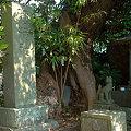 Photos: 鎌倉正宗稲荷