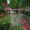 川と橋と紅い花