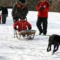 写真: 103 浅間高原ウィンターフェスティバル犬ソリ