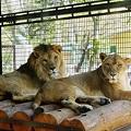 906 小諸懐古園の動物園 by ホテルグリーンプラザ軽井沢