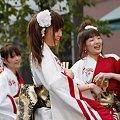 写真: 早稲田大学よさこいチーム 東京花火_08 - 第10回 東京よさこい