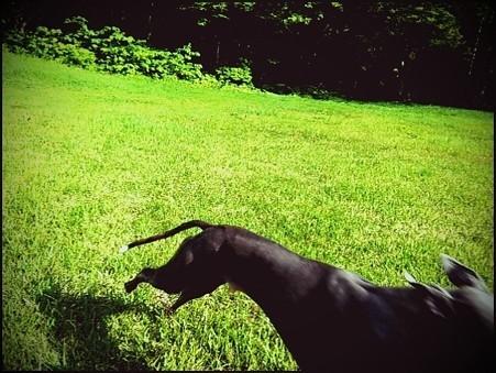 飛行犬 (5)