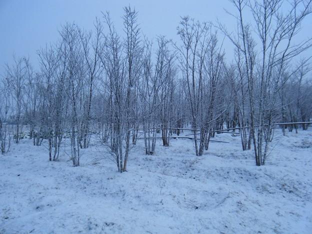2010年大晦日の雪化粧