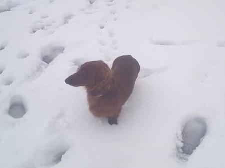 雪とイヨン 20091101