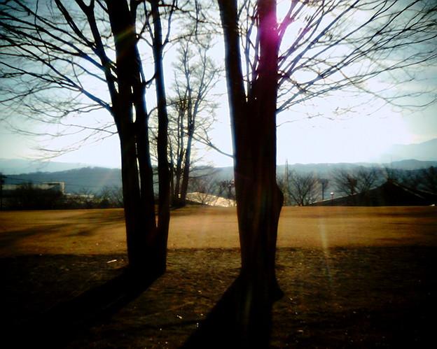 照らされる木vq