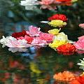 写真: Floating Flower