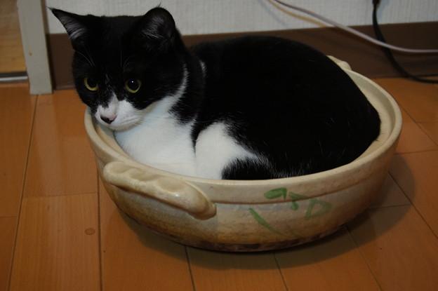 写真: ねこ鍋