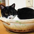 写真: 猫鍋
