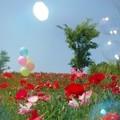 Photos: IMGP3914_0527