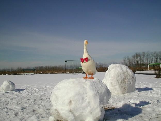 雪だるま大好きアヒルのおさんぽ(お正月)