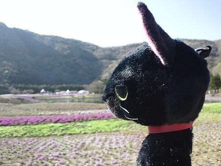 芝桜をみつめる@富士芝桜まつり2011