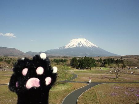 にゃー@富士芝桜まつり2011