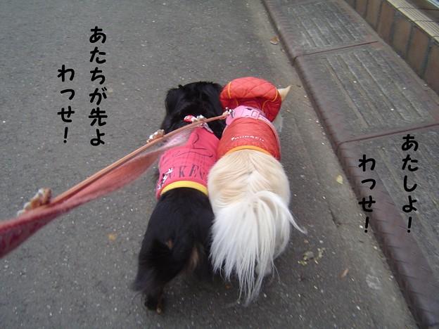 Photos: ちょこ散歩する