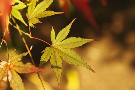 円覚寺の紅葉(5)