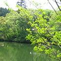 Photos: 池のほとり
