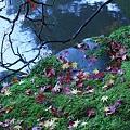 写真: 苔とモミジ  縦画像