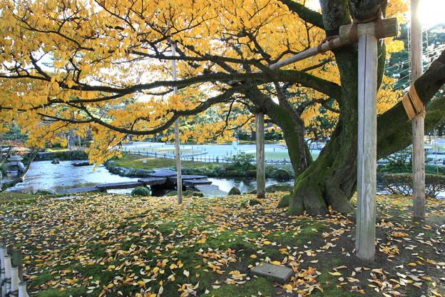 兼六園旭桜の紅葉と曲水(3) 雁行橋