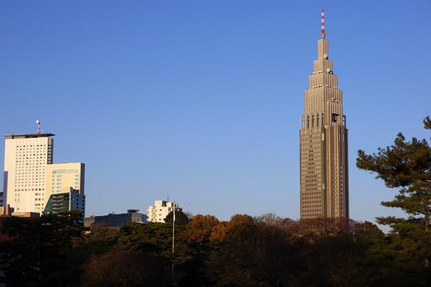 明治神宮からのドコモタワー
