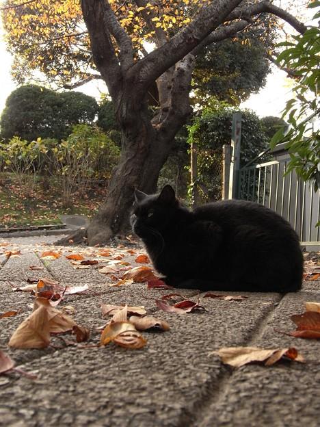 山手公園付近の猫たち(R0032140)