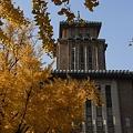 写真: R0031909 - キングの秋