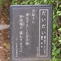 Photos: 橙(ダイダイ)