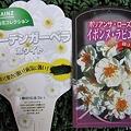 花ラベル・ガーベラとバラ