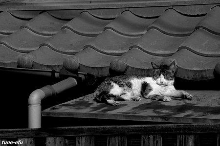 猫眠る屋根