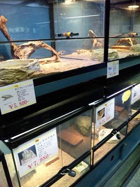 20091212 ペットショップP&LUXE爬虫類