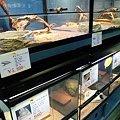 Photos: 20091212 ペットショップP&LUXE爬虫類
