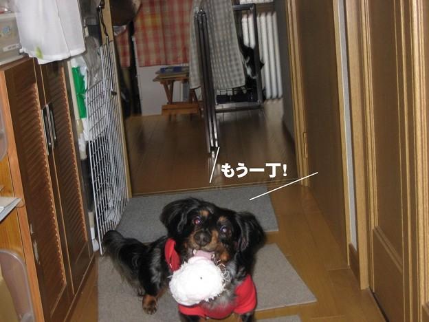写真: senna0779