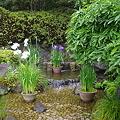 Photos: 長谷寺庭園