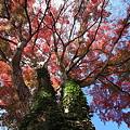 秋を求めて♪