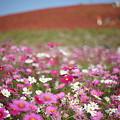 可愛い花♪