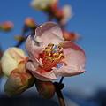 開花の季節