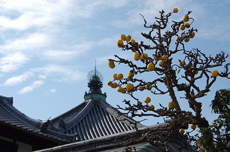 興福寺 南円堂屋根と花梨
