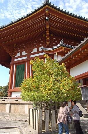 興福寺南円堂 右近の橘