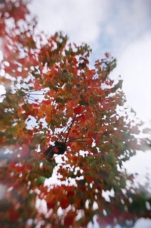 トイカメラde紅葉2009/11/12-11650016