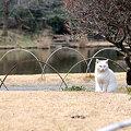 写真: 20100219_100818