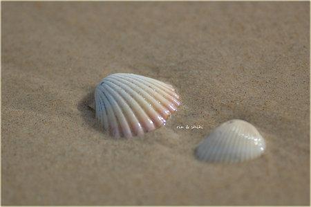 波に洗われて・・・。