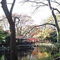 Photos: 競馬場・秋の日本庭園