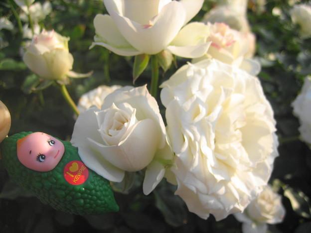 真珠貝の花1