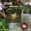 2010年野の花カレンダー