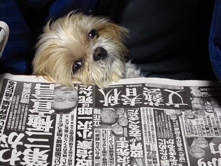 新聞読めないよ~2