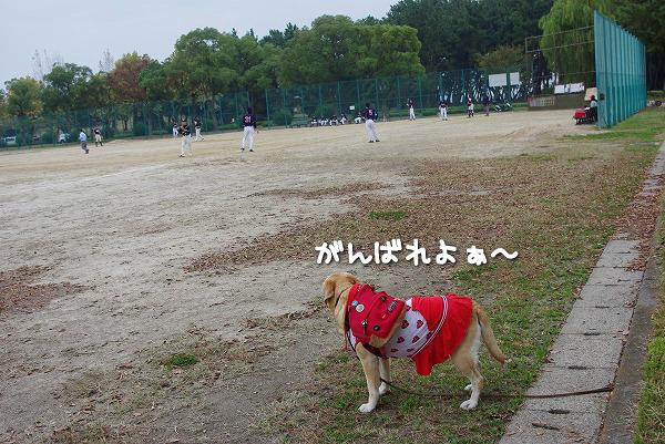 s-myu2009_1101(091)